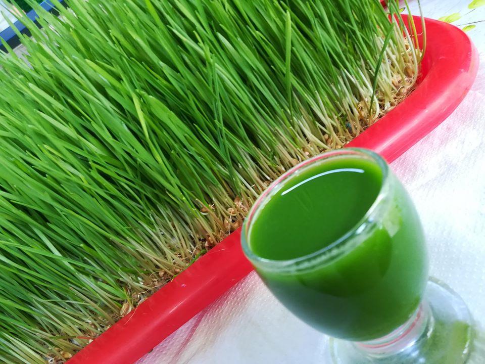 iarba de grâu pentru vedere)